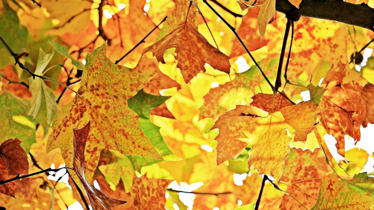 Herfsttip: herfstgeuren voor thuis