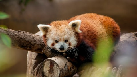 De schattigste dieren ter wereld