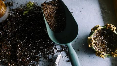 Cymbidium: Woonplant van de maand oktober